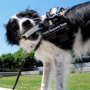 عینک هوشمند گوگل مخصوص سگها