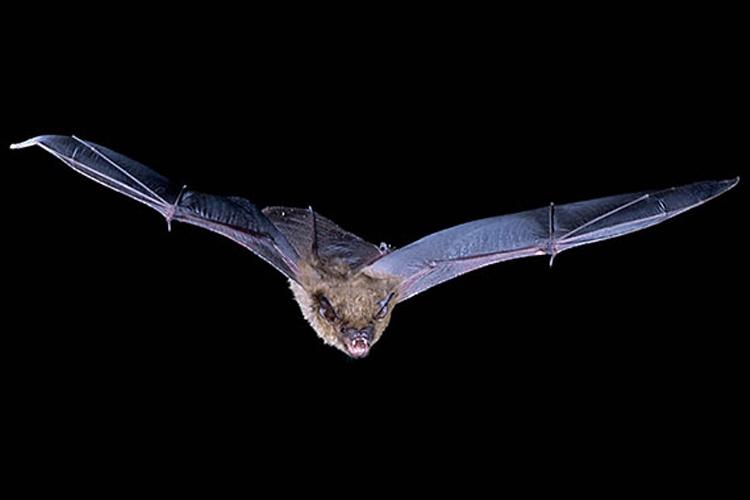 درک احساس یک خفاش با گوشسپردن به اصوات غیرقابل شنیدن