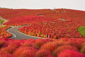 فتوگرافر : عکس هایی از تحول زیبا در پاییز