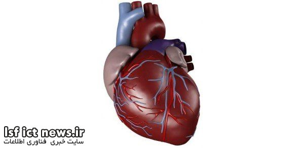 ساخت مدل ۳ بعدی قلب در دانشگاه امیرکبیر