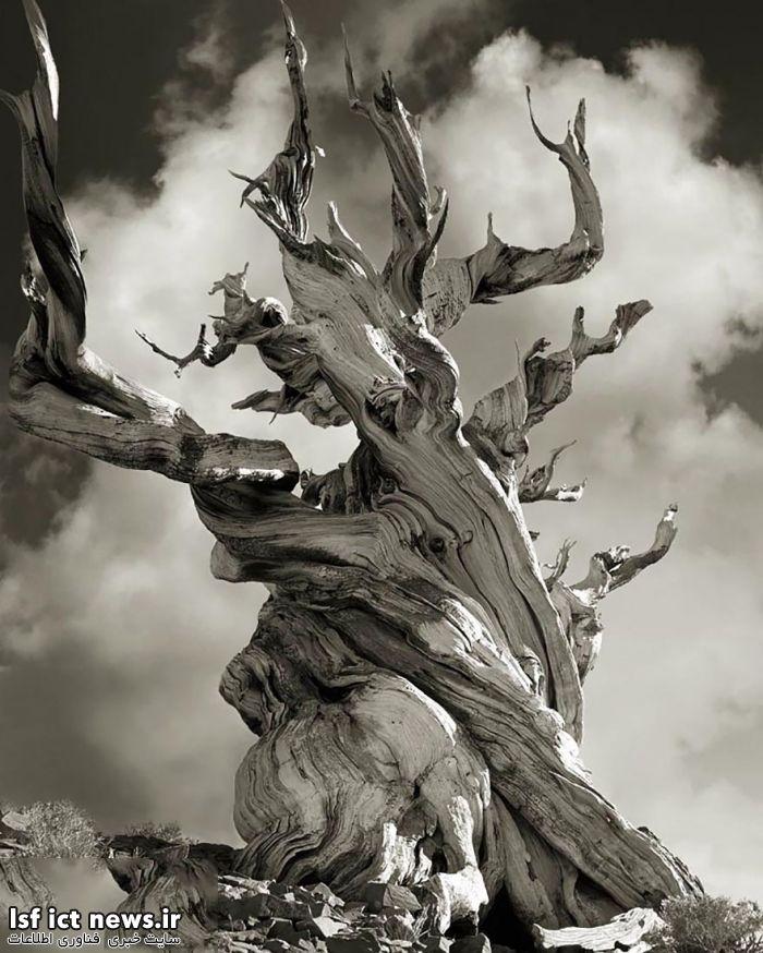 فتوگرافر : این تصاویر فوق العاده از درختان را از دست ندهید!