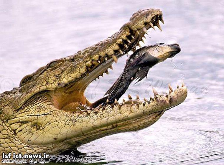 فوتوگرافر : تصاویر زیبایی از حیوانات که در بهترین زمان ممکن شکار شدهاند