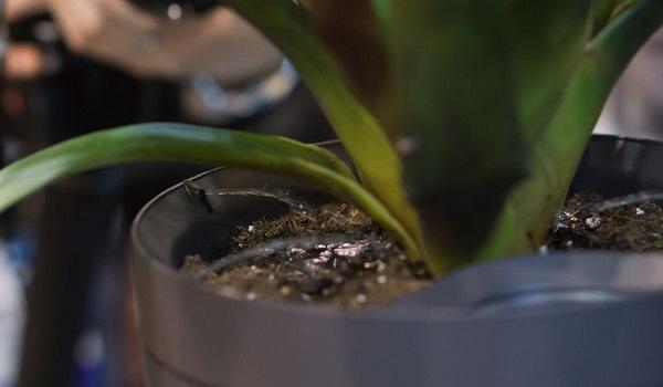با گلدانی که کمپانی Parrot معرفی نموده گیاهان دیگر هرگز نمی میرند